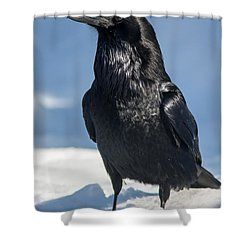Nevermore Shower Curtain by Jack Bell