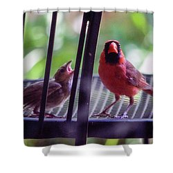 New Baby Cardinal Shower Curtain