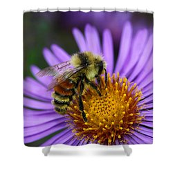 Shower Curtain featuring the photograph New England Aster And Bee by Steve Augustin