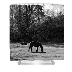New Forest Silhouette Shower Curtain