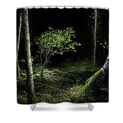 New Growth - Birch Sapling Shower Curtain