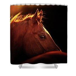 New Kid On The Block - Three Bars Ranch Shower Curtain