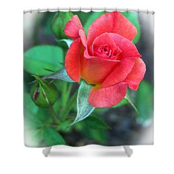 Shower Curtain featuring the photograph New Life In A Coral Rosebud by Sue Melvin