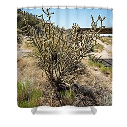 New Mexico Cholla Shower Curtain