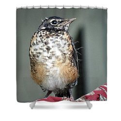 New To World Shower Curtain