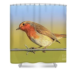 New Year Robin Shower Curtain by Roy McPeak