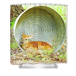 Newborn Fawn Finds Shelter In An Old Washtub Shower Curtain by A Gurmankin