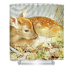 Newborn Fawn Takes Shelter In An Old Washtub Shower Curtain