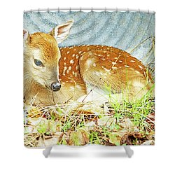 Newborn Fawn Takes Shelter In An Old Washtub II Shower Curtain