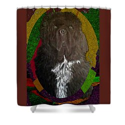 Shower Curtain featuring the drawing Newfie Colors by Michelle Audas