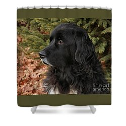 Shower Curtain featuring the photograph Newfie Portrait by Debbie Stahre