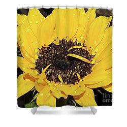 Shower Curtain featuring the photograph Nice Sunflower by Elvira Ladocki