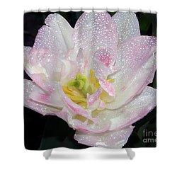 Shower Curtain featuring the photograph Nice Tulip by Elvira Ladocki