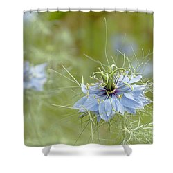 Shower Curtain featuring the photograph Nigella Damascena by Cindy Garber Iverson