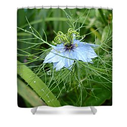 Nigella In Spring Rain Shower Curtain