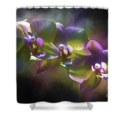 Night Bliss Shower Curtain by Ken Frischkorn