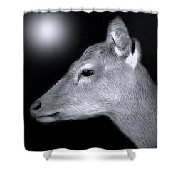 Shower Curtain featuring the photograph Night Doe by Marion Johnson