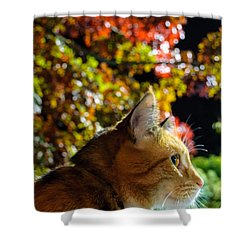 Shower Curtain featuring the photograph Night Stalker by Tikvah's Hope
