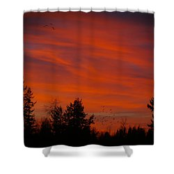 Nightbirds Shower Curtain