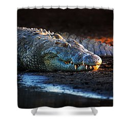 Nile Crocodile On Riverbank-1 Shower Curtain by Johan Swanepoel