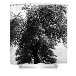 Nina Tree Dressed Out Bw Shower Curtain