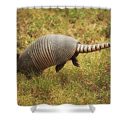 Nine-banded Armadillo Jumping Shower Curtain