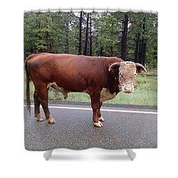 Shower Curtain featuring the photograph No Bull by Roberta Byram