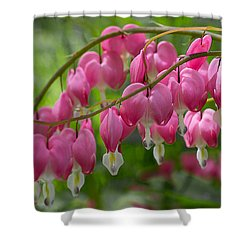 Bleeding Heart Shower Curtain