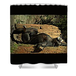 Shower Curtain featuring the photograph No Worries by Jessica Brawley
