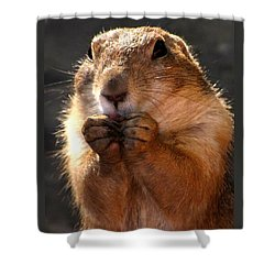 Snacking Prairie Dog Shower Curtain