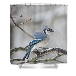 Nor' Easter Blue Jay Shower Curtain