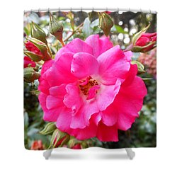 Nora's Knockout Roses Shower Curtain