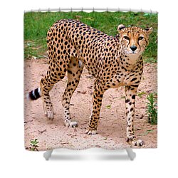 North African Cheetah Shower Curtain