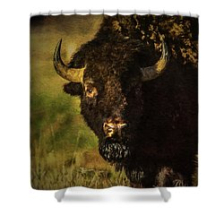 North American Buffalo Shower Curtain