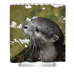 North American River Otter Swimming In A River Shower Curtain