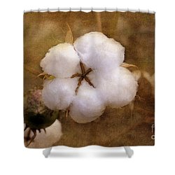 North Carolina Cotton Boll Shower Curtain