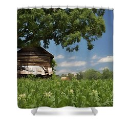 Shower Curtain featuring the photograph North Carolina Tobacco by Benanne Stiens
