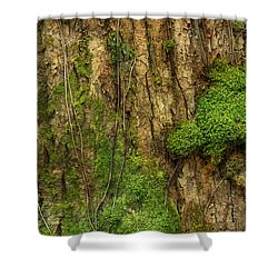 Shower Curtain featuring the photograph North Side Of The Tree by Mike Eingle