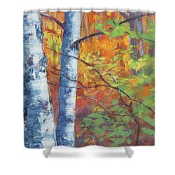 North Woods Birch Shower Curtain
