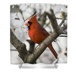 Shower Curtain featuring the photograph Northern Cardinal And Magnolia 2 - D009893 by Daniel Dempster