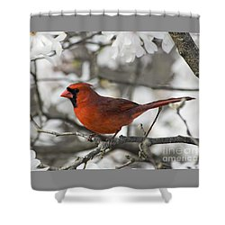 Shower Curtain featuring the photograph Northern Cardinal And Magnolia 3 - D009896 by Daniel Dempster