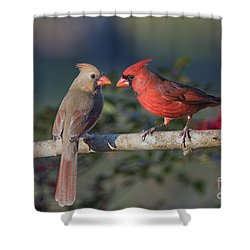 Northern Cardinal Encounter Shower Curtain