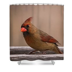Northern Cardinal Female Winter Shower Curtain