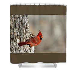 Northern Cardinal On Tree Shower Curtain