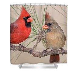 Northern Cardinal Pair In Pine Tree Shower Curtain