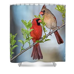 Northern Cardinal Pair In Spring Shower Curtain