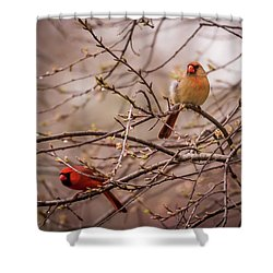 Shower Curtain featuring the photograph Northern Cardinal Pair In Spring by Terry DeLuco