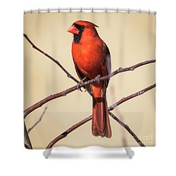 Northern Cardinal Profile Shower Curtain by Ricky L Jones