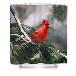 Northern Cardinal Red Shower Curtain
