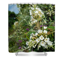 Northern Cloudywing Shower Curtain